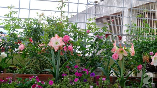 Người phụ nữ Hà Thành dành 8 năm cho niềm đam mê biến sân thượng thành góc vườn hoa rực rỡ - Ảnh 2.