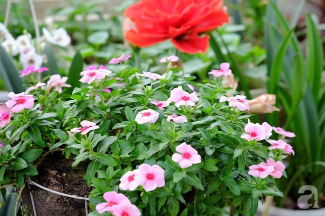 Người phụ nữ Hà Thành dành 8 năm cho niềm đam mê biến sân thượng thành góc vườn hoa rực rỡ - Ảnh 4.
