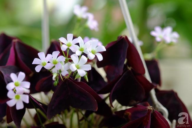 Người phụ nữ Hà Thành dành 8 năm cho niềm đam mê biến sân thượng thành góc vườn hoa rực rỡ - Ảnh 5.