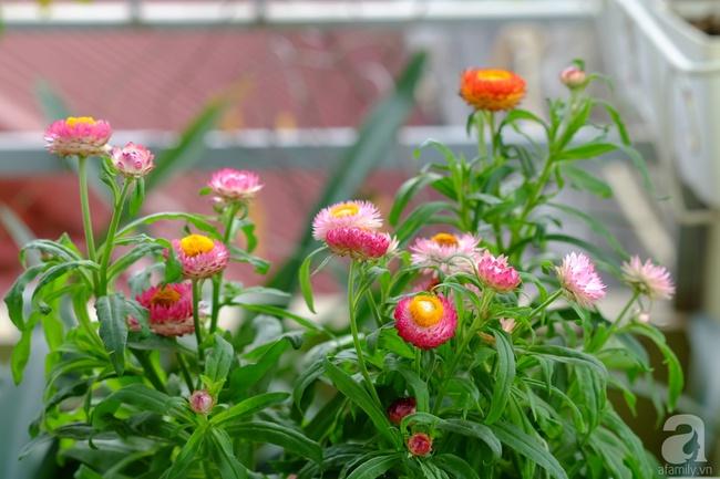 Người phụ nữ Hà Thành dành 8 năm cho niềm đam mê biến sân thượng thành góc vườn hoa rực rỡ - Ảnh 6.