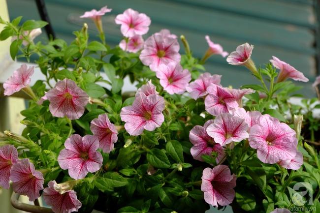Người phụ nữ Hà Thành dành 8 năm cho niềm đam mê biến sân thượng thành góc vườn hoa rực rỡ - Ảnh 9.