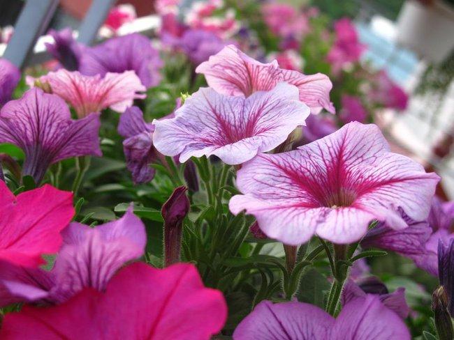 Người phụ nữ Hà Thành dành 8 năm cho niềm đam mê biến sân thượng thành góc vườn hoa rực rỡ - Ảnh 11.