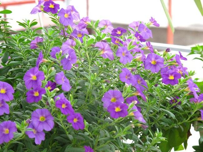 Người phụ nữ Hà Thành dành 8 năm cho niềm đam mê biến sân thượng thành góc vườn hoa rực rỡ - Ảnh 12.