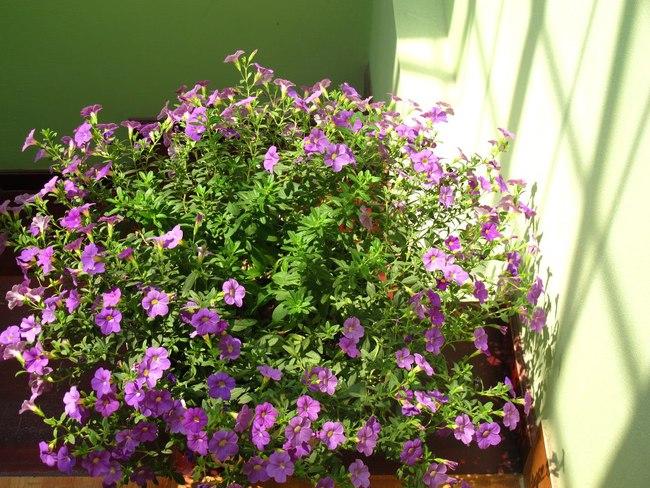 Người phụ nữ Hà Thành dành 8 năm cho niềm đam mê biến sân thượng thành góc vườn hoa rực rỡ - Ảnh 13.