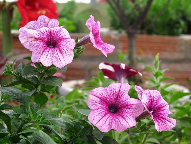 Người phụ nữ Hà Thành dành 8 năm cho niềm đam mê biến sân thượng thành góc vườn hoa rực rỡ - Ảnh 14.