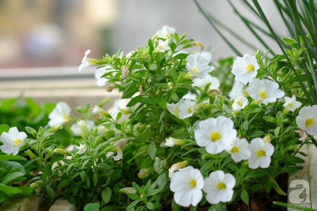 Người phụ nữ Hà Thành dành 8 năm cho niềm đam mê biến sân thượng thành góc vườn hoa rực rỡ - Ảnh 15.