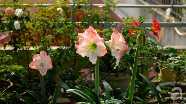 Người phụ nữ Hà Thành dành 8 năm cho niềm đam mê biến sân thượng thành góc vườn hoa rực rỡ - Ảnh 16.