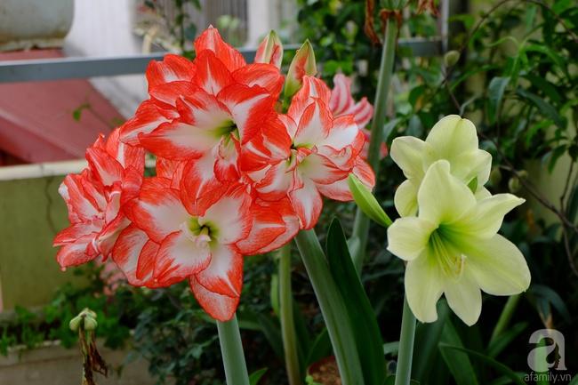 Người phụ nữ Hà Thành dành 8 năm cho niềm đam mê biến sân thượng thành góc vườn hoa rực rỡ - Ảnh 17.