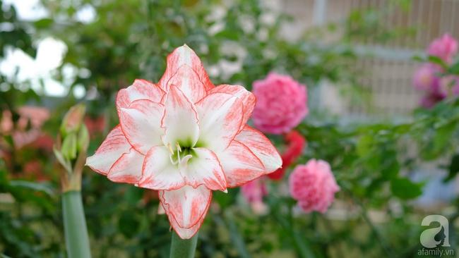 Người phụ nữ Hà Thành dành 8 năm cho niềm đam mê biến sân thượng thành góc vườn hoa rực rỡ - Ảnh 18.