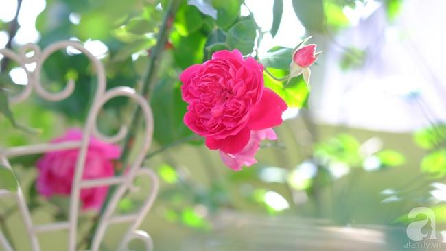 Người phụ nữ Hà Thành dành 8 năm cho niềm đam mê biến sân thượng thành góc vườn hoa rực rỡ - Ảnh 22.