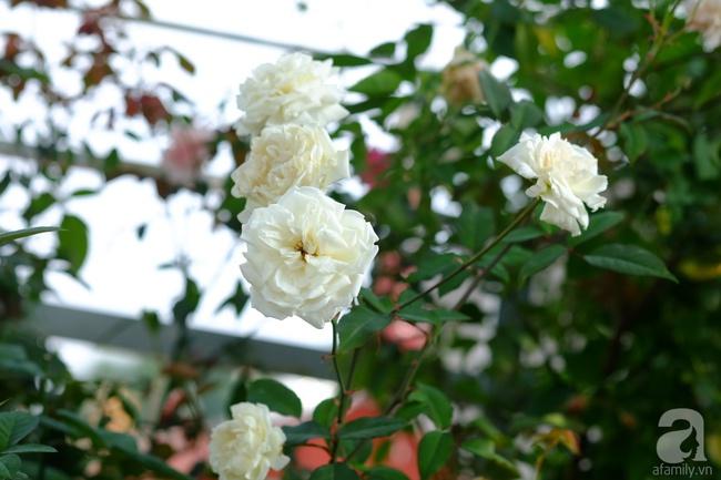 Người phụ nữ Hà Thành dành 8 năm cho niềm đam mê biến sân thượng thành góc vườn hoa rực rỡ - Ảnh 26.