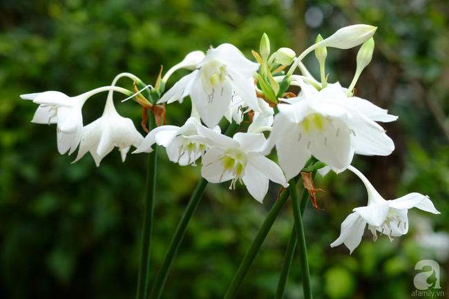 Người phụ nữ Hà Thành dành 8 năm cho niềm đam mê biến sân thượng thành góc vườn hoa rực rỡ - Ảnh 29.