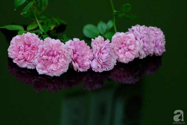 Người phụ nữ Hà Thành dành 8 năm cho niềm đam mê biến sân thượng thành góc vườn hoa rực rỡ - Ảnh 31.