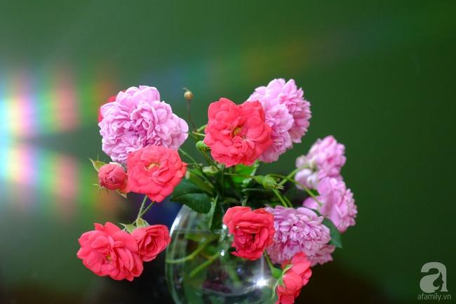 Người phụ nữ Hà Thành dành 8 năm cho niềm đam mê biến sân thượng thành góc vườn hoa rực rỡ - Ảnh 32.