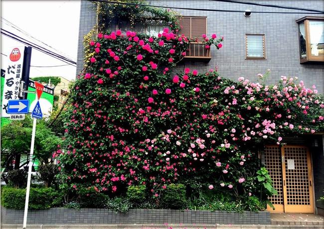 Khu vườn hoa hồng đẹp như cổ tích trên sân thượng của cô sinh viên trẻ - Ảnh 3.