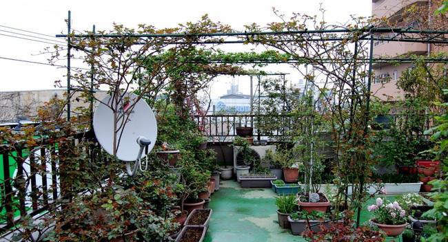 Khu vườn hoa hồng đẹp như cổ tích trên sân thượng của cô sinh viên trẻ - Ảnh 5.