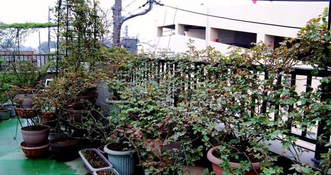 Khu vườn hoa hồng đẹp như cổ tích trên sân thượng của cô sinh viên trẻ - Ảnh 6.