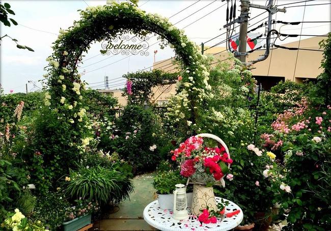 Khu vườn hoa hồng đẹp như cổ tích trên sân thượng của cô sinh viên trẻ - Ảnh 7.