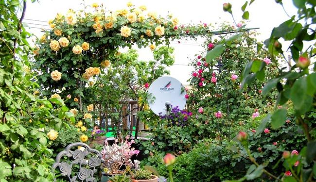 Khu vườn hoa hồng đẹp như cổ tích trên sân thượng của cô sinh viên trẻ - Ảnh 9.