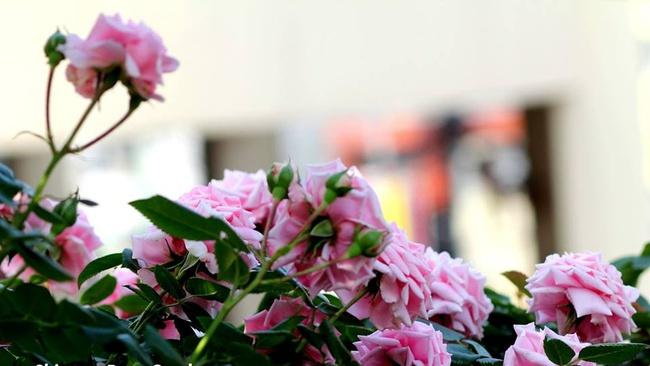 Khu vườn hoa hồng đẹp như cổ tích trên sân thượng của cô sinh viên trẻ - Ảnh 18.