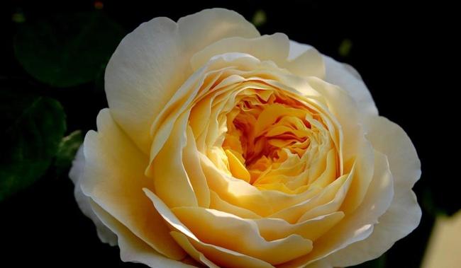 Khu vườn hoa hồng đẹp như cổ tích trên sân thượng của cô sinh viên trẻ - Ảnh 21.