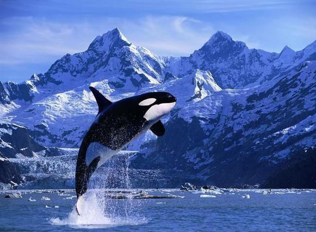 Có một Alaska hoang dã và đẹp phóng khoáng khiến ai cũng ước một lần được đặt chân - Ảnh 2.