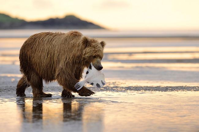 Có một Alaska hoang dã và đẹp phóng khoáng khiến ai cũng ước một lần được đặt chân - Ảnh 4.