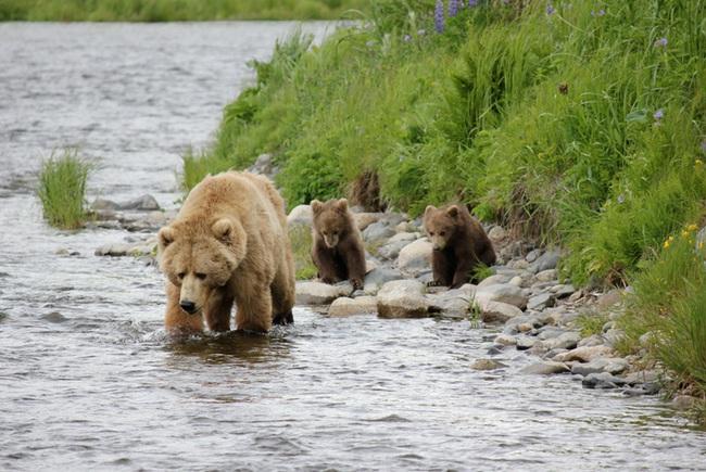 Có một Alaska hoang dã và đẹp phóng khoáng khiến ai cũng ước một lần được đặt chân - Ảnh 8.