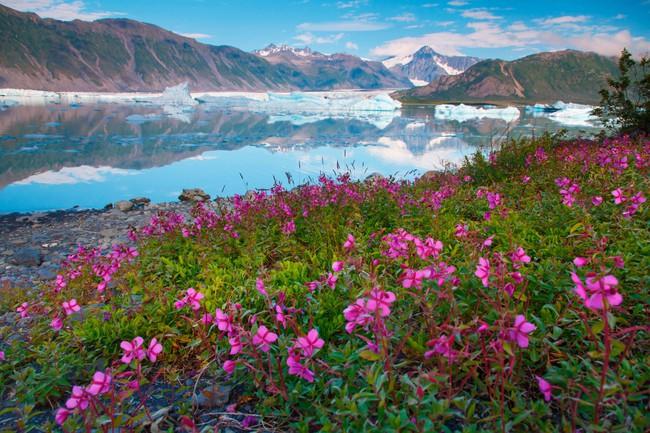 Có một Alaska hoang dã và đẹp phóng khoáng khiến ai cũng ước một lần được đặt chân - Ảnh 11.