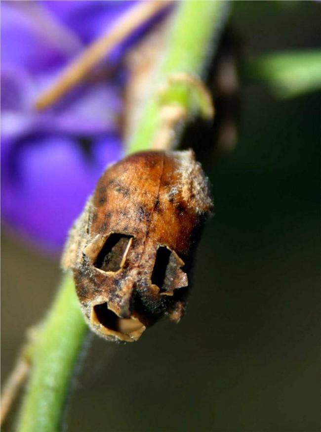 Loài hoa kì lạ tuyệt đẹp mang nhiều giai thoại huyền bí - Ảnh 5