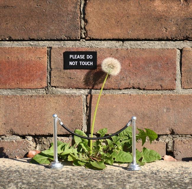 Nghệ thuật đường phố siêu sáng tạo nhờ kết hợp với thiên nhiên xung quanh - Ảnh 14.
