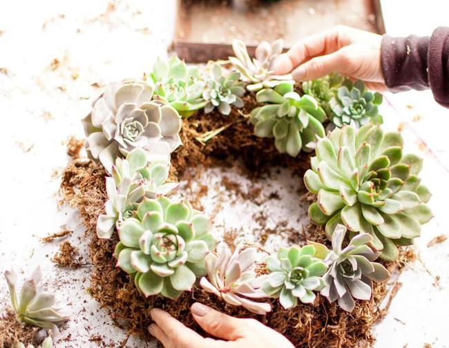 Ý tưởng làm vòng treo trang trí vườn vừa đơn giản vừa đẹp từ những cây mọng nước  - Ảnh 1.