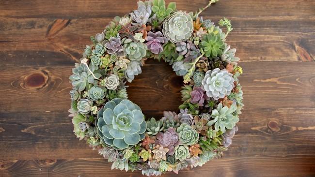 Ý tưởng làm vòng treo trang trí vườn vừa đơn giản vừa đẹp từ những cây mọng nước  - Ảnh 4.