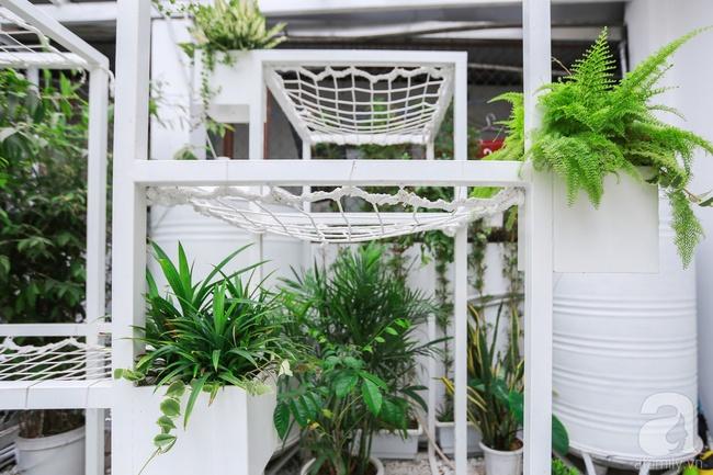 """Khu vườn """"điều hòa"""" không sợ nắng mùa hè của chủ nhân 9x ở Thái Thịnh, Hà Nội - Ảnh 3."""