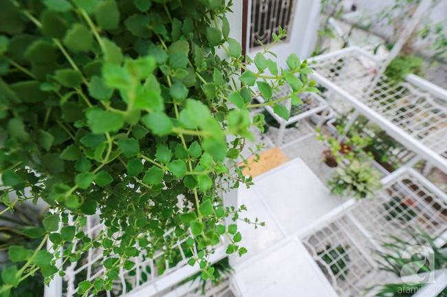 """Khu vườn """"điều hòa"""" không sợ nắng mùa hè của chủ nhân 9x ở Thái Thịnh, Hà Nội - Ảnh 5."""