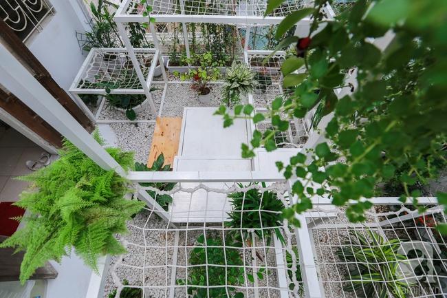 """Khu vườn """"điều hòa"""" không sợ nắng mùa hè của chủ nhân 9x ở Thái Thịnh, Hà Nội - Ảnh 6."""
