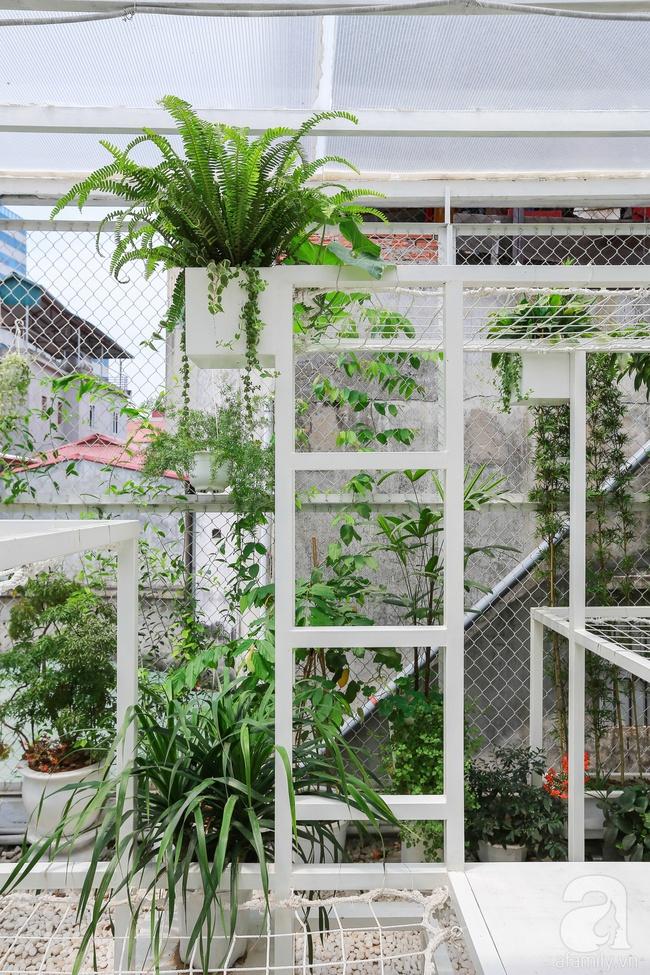 """Khu vườn """"điều hòa"""" không sợ nắng mùa hè của chủ nhân 9x ở Thái Thịnh, Hà Nội - Ảnh 12."""