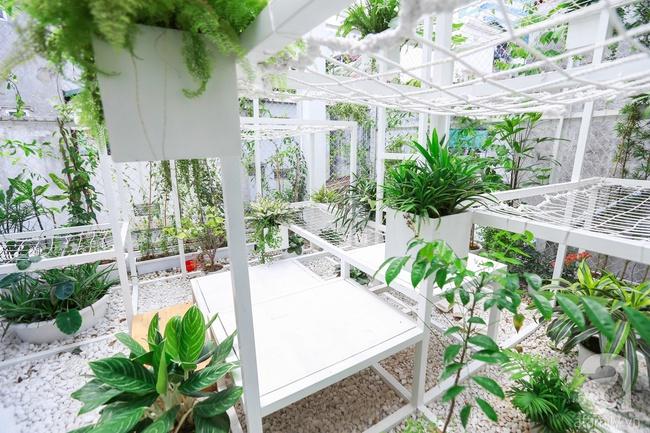 """Khu vườn """"điều hòa"""" không sợ nắng mùa hè của chủ nhân 9x ở Thái Thịnh, Hà Nội - Ảnh 16."""