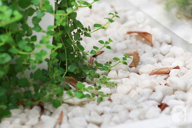 """Khu vườn """"điều hòa"""" không sợ nắng mùa hè của chủ nhân 9x ở Thái Thịnh, Hà Nội - Ảnh 17."""