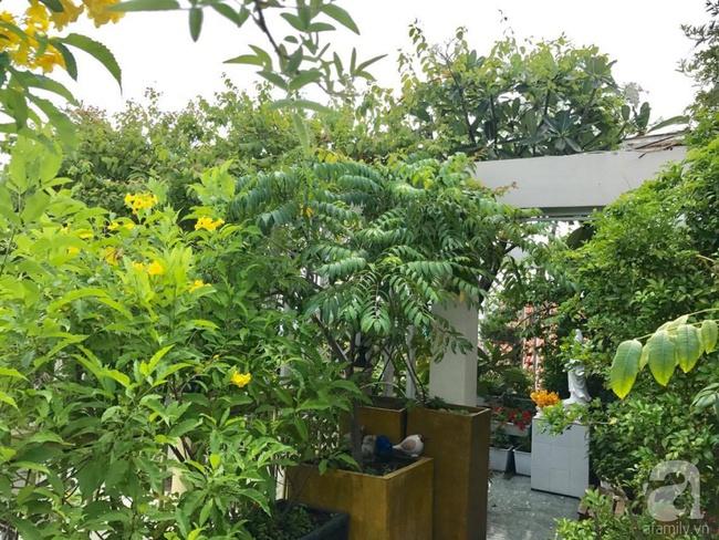Khu vườn trên sân thượng rộng tới 200m² bạt ngàn rau quả sạch của nữ doanh nhân Sài Thành - Ảnh 11.