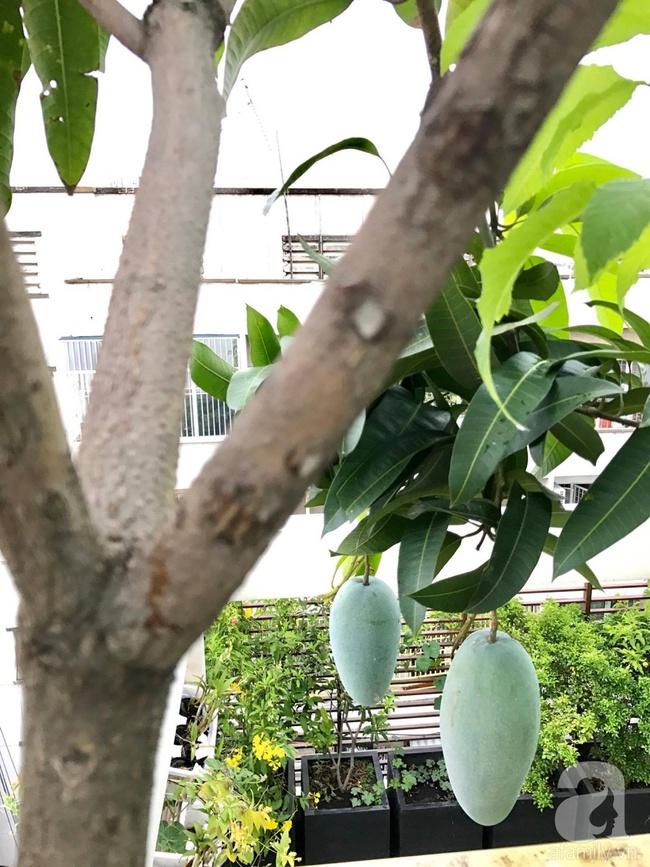 Khu vườn trên sân thượng rộng tới 200m² bạt ngàn rau quả sạch của nữ doanh nhân Sài Thành - Ảnh 13.