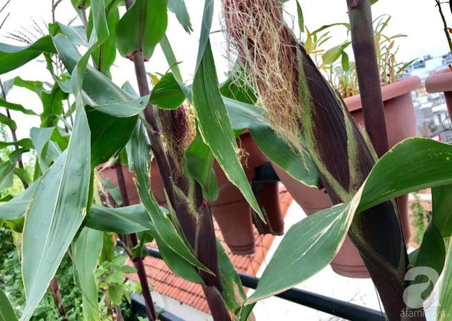 Khu vườn trên sân thượng rộng tới 200m² bạt ngàn rau quả sạch của nữ doanh nhân Sài Thành - Ảnh 16.