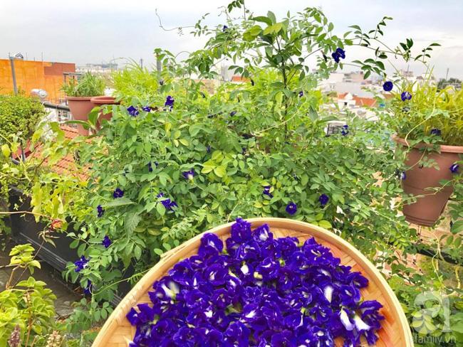Khu vườn trên sân thượng rộng tới 200m² bạt ngàn rau quả sạch của nữ doanh nhân Sài Thành - Ảnh 21.
