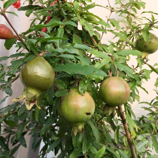 Khu vườn trên sân thượng rộng tới 200m² bạt ngàn rau quả sạch của nữ doanh nhân Sài Thành - Ảnh 22.
