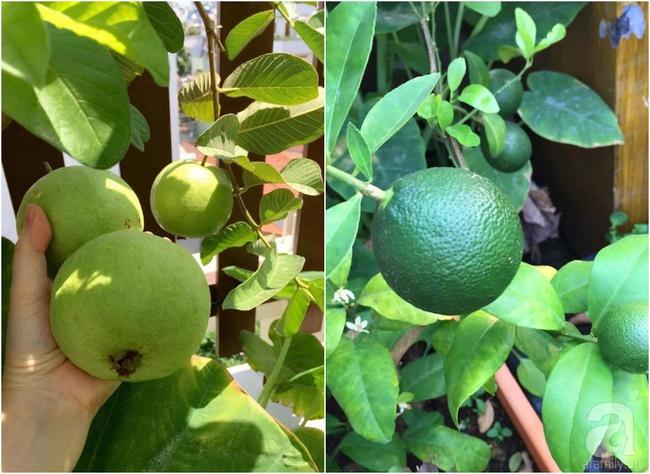 Khu vườn trên sân thượng rộng tới 200m² bạt ngàn rau quả sạch của nữ doanh nhân Sài Thành - Ảnh 24.