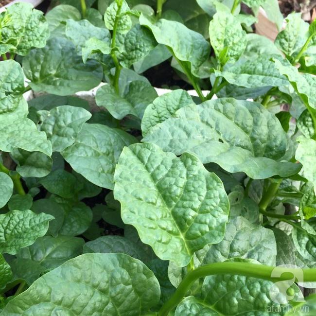 Khu vườn trên sân thượng rộng tới 200m² bạt ngàn rau quả sạch của nữ doanh nhân Sài Thành - Ảnh 30.