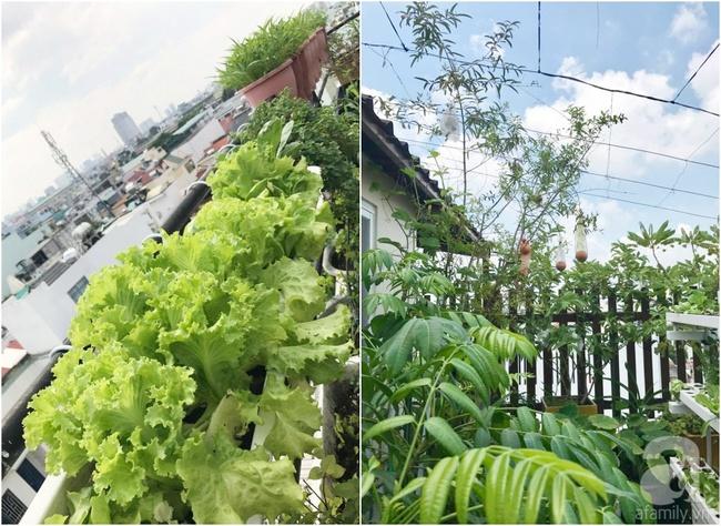 Khu vườn trên sân thượng rộng tới 200m² bạt ngàn rau quả sạch của nữ doanh nhân Sài Thành - Ảnh 32.