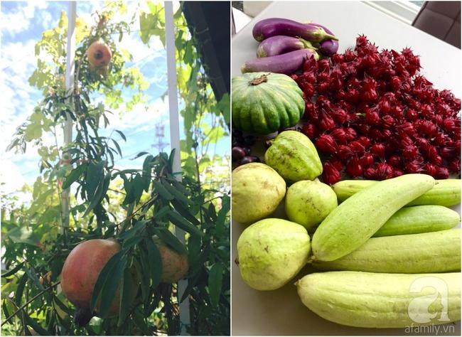 Khu vườn trên sân thượng rộng tới 200m² bạt ngàn rau quả sạch của nữ doanh nhân Sài Thành - Ảnh 35.
