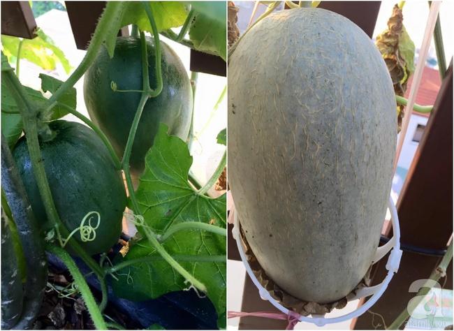 Khu vườn trên sân thượng rộng tới 200m² bạt ngàn rau quả sạch của nữ doanh nhân Sài Thành - Ảnh 39.