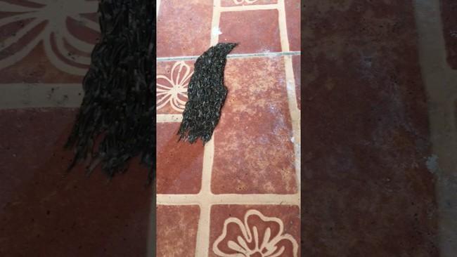 Sinh vật lạ màu đen lúc nhúc di chuyển trên sàn nhà, lại gần mới phát hiện sự thật sởn tóc gáy 2